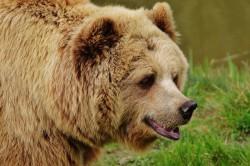bear-1315128