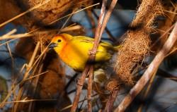bird-1557021