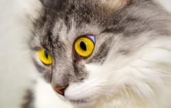 cat-76116