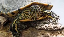 exotic-turtle-1560201