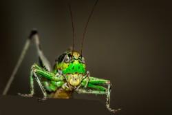 grasshopper-1533091