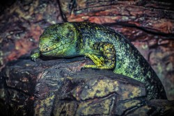lizard-224857